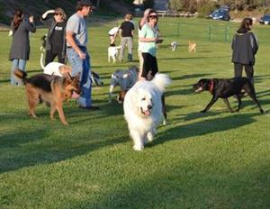 Dog Parks: What You Should Know Before You Go